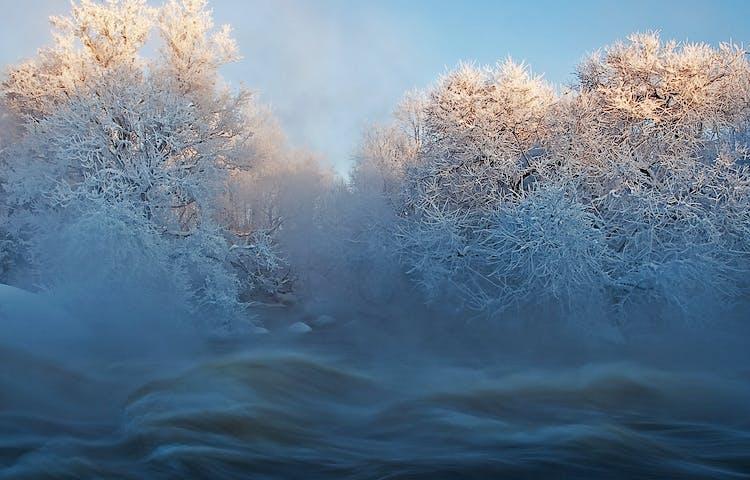 Forsande vatten i ett vinterlandskap med snö på träden.
