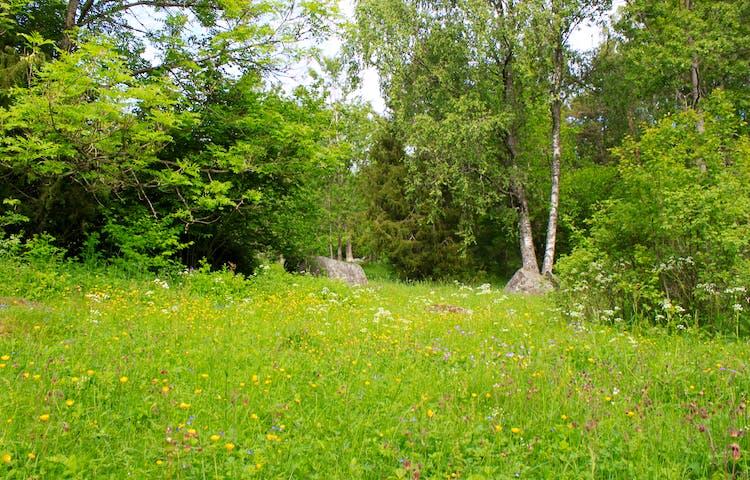 En öppen hagmark med många blommande växter.