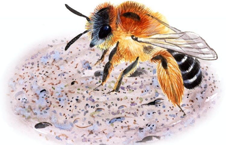 Ett tecknat bi med brunröda håriga bakben och mellankropp och svart-vit randig bakkropp.