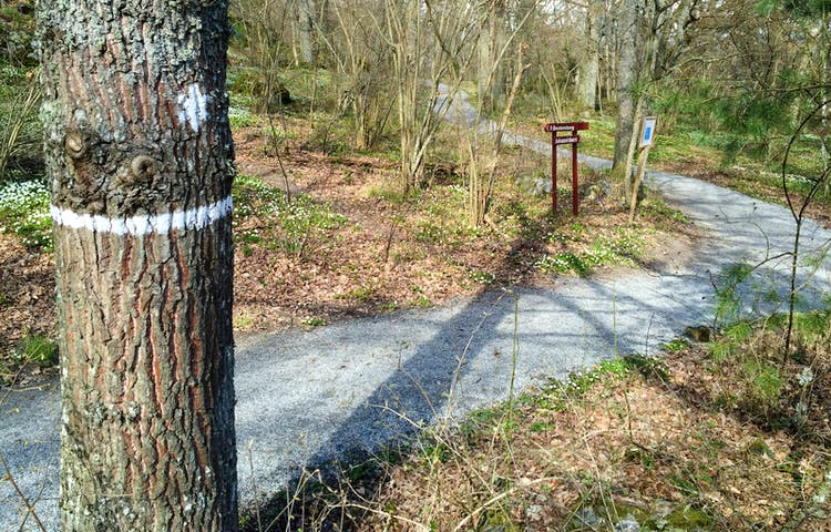 Träd med vit ledmarkering. I bakgrunden skymtas träpilar som visar vägen.