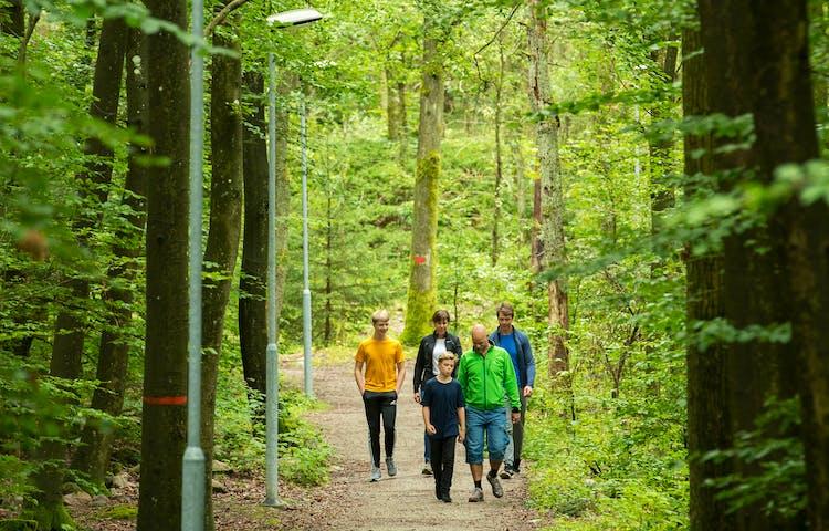 fem personer promenerar på anlagd stig i bokskog