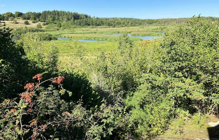 Vy med träd med röda rönnbär och gröna buskar i förgrunden. I bakgrundens syns en blå vattenspegel.