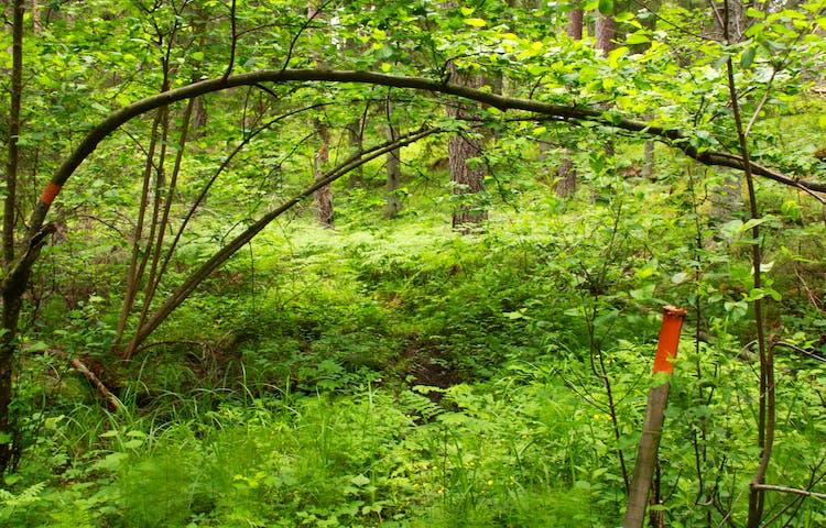 I en snårig skog med högt gräs står en stolpe med orange ledmarkering på.