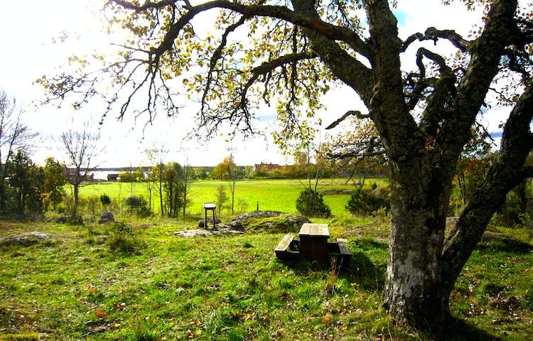 Ett bänkbord står på ojämn gräsmark. Runtom är det gott om träd och större stenar.