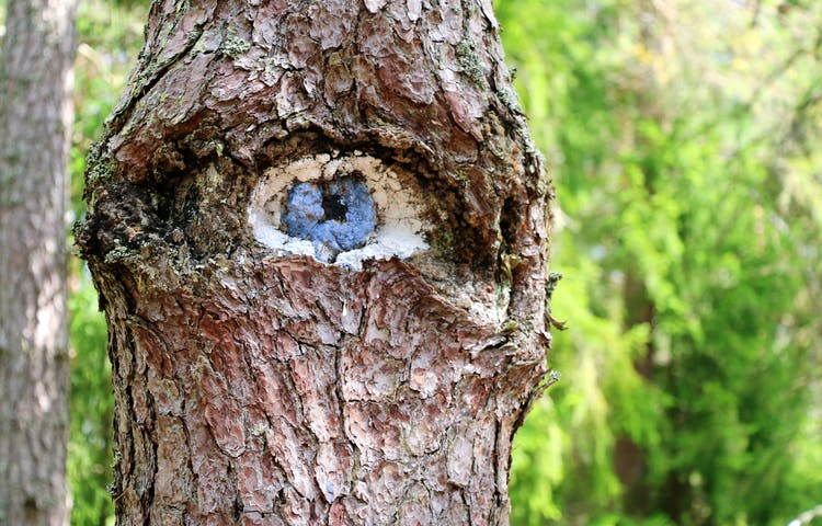En trädstam med en hålighet som målats så att det ser ut som ett öga.