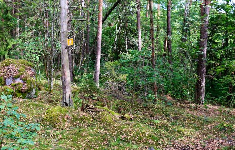 Ledmarkering på träd.