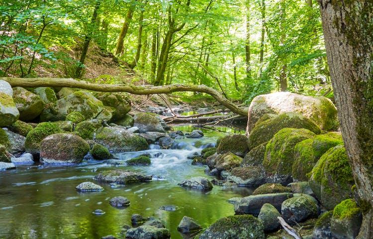 Porlande bäck med mossiga stenar i skogsmiljö