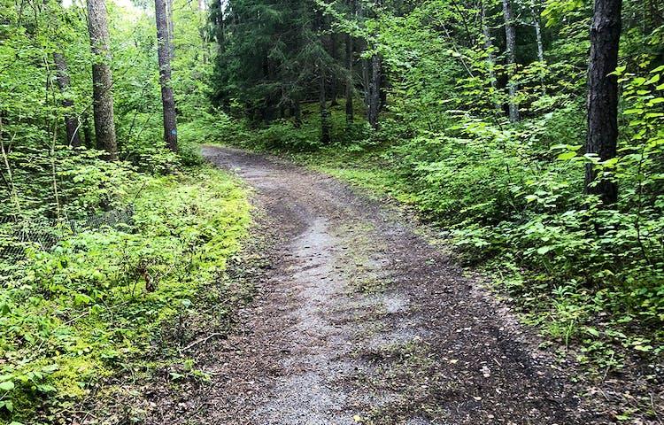Grusad väg genom grönskande skog.