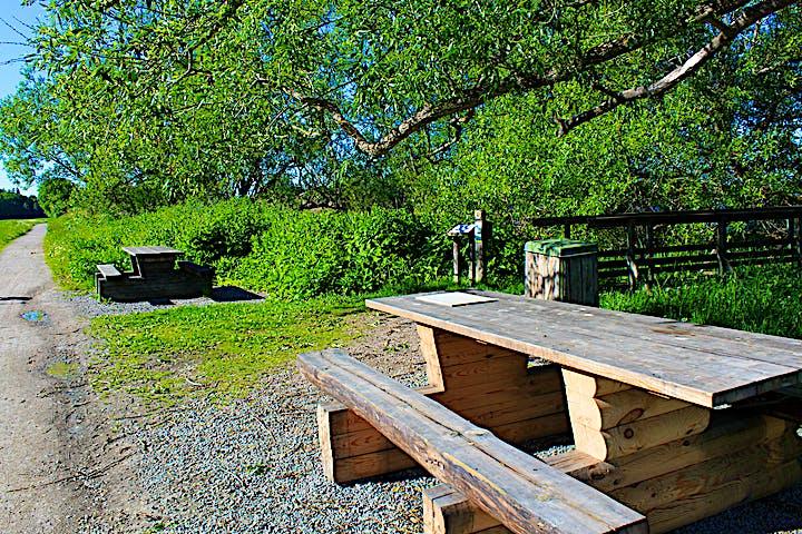 Två bänkbord står på varsin sida av en spång som leder till fågeltornet. Bredvid bänkborden går en grusad gångväg.