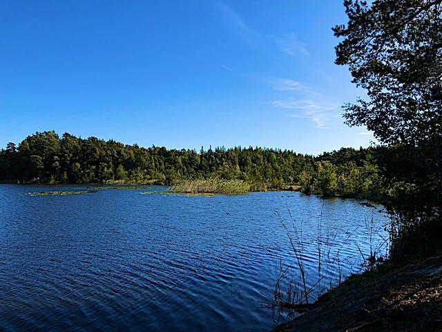Dammstakärret med växtlighet runt omkring.