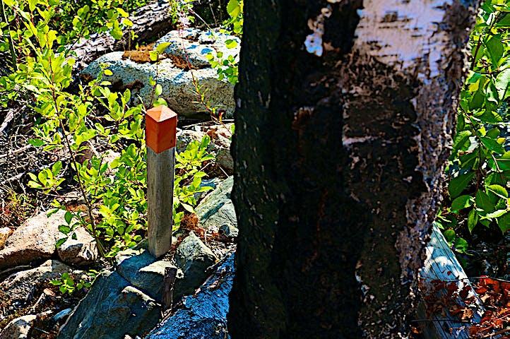 Knähög stolpe med orange topp bredvid sotsvart björkstam.