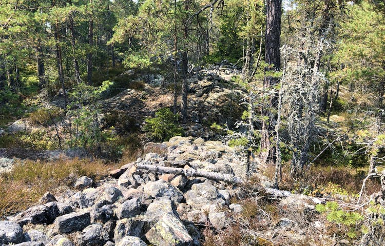 Ruin av fornborg i Borgbergets naturreservat.