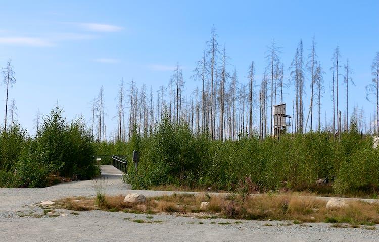 Trätorn på avstånd  bland brända träd och grön sly.