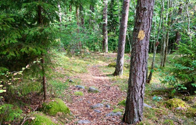 Stig i skog med ledmarkering på träd.