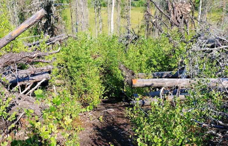 Rep i en brant. Orange punkt målad på en död liggande trädstam.
