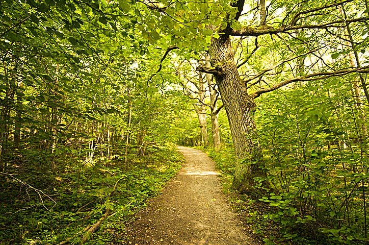 Grönska inne i Flatenreservatet. Foto: Johan Pontén
