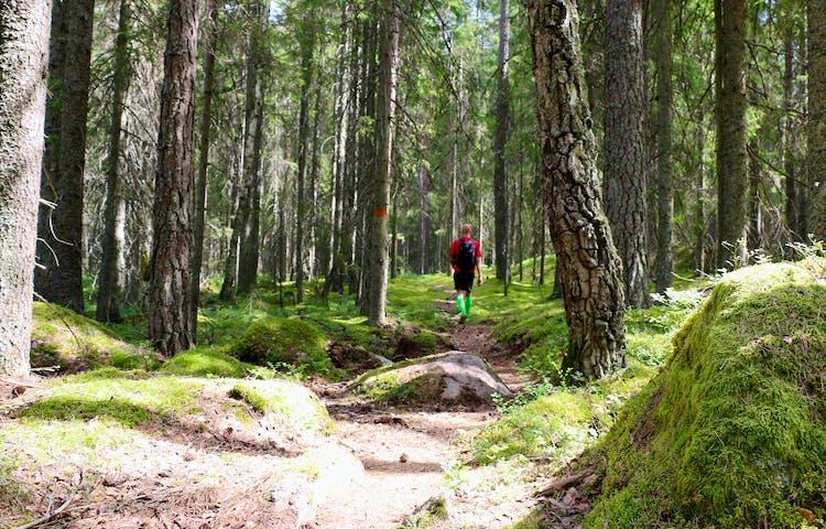 En person går på en stig i skogen, orangemarkering på träd.