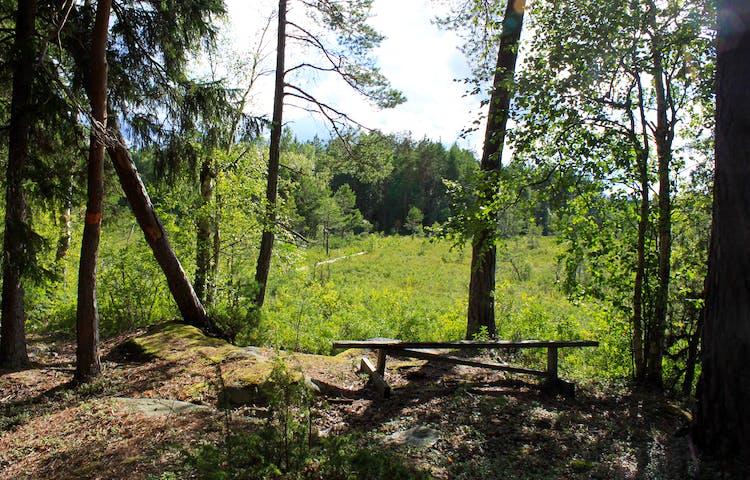 I en liten glänta i skogen står en sittbänk. Härifrån har man utsikt över en spång som löper över myrmarken.