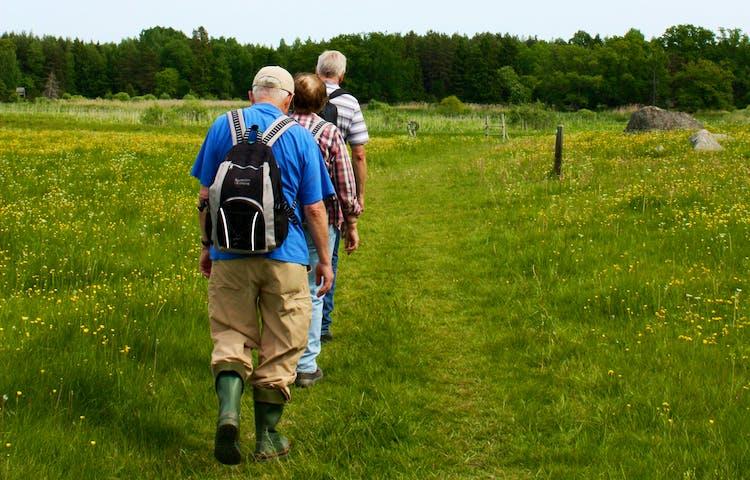 En grupp går längs med en stig över en äng.