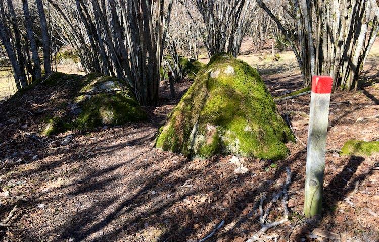 En kort stolpe med en röd markering står bland buskar och stora stenar.