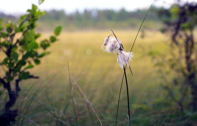 En vissen myrull i närbild med myren i bakgrunden.
