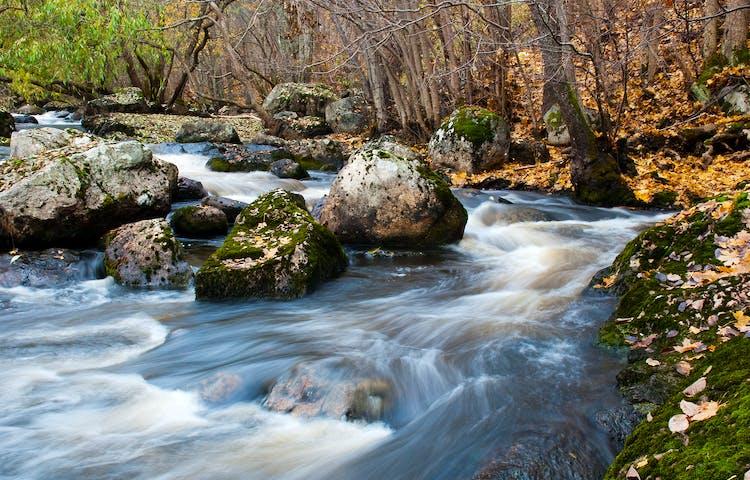 Vattnet forsar runt stenar. På sidan av ån ligger gula löv från träden.