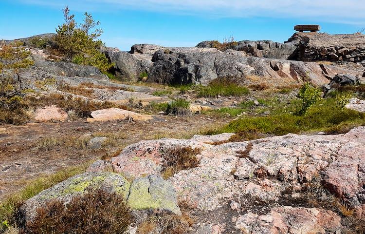 Rönnskärs udde naturreservat. Foto: Josefin Sundberg