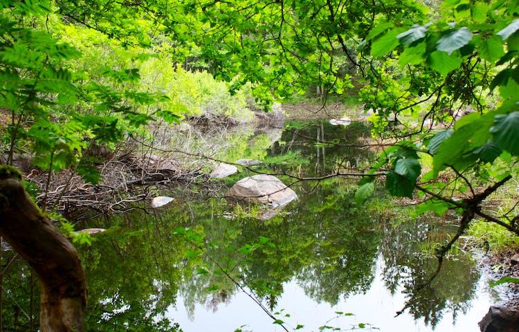 En vattenfylld sänka omgiven av tät lövskog.