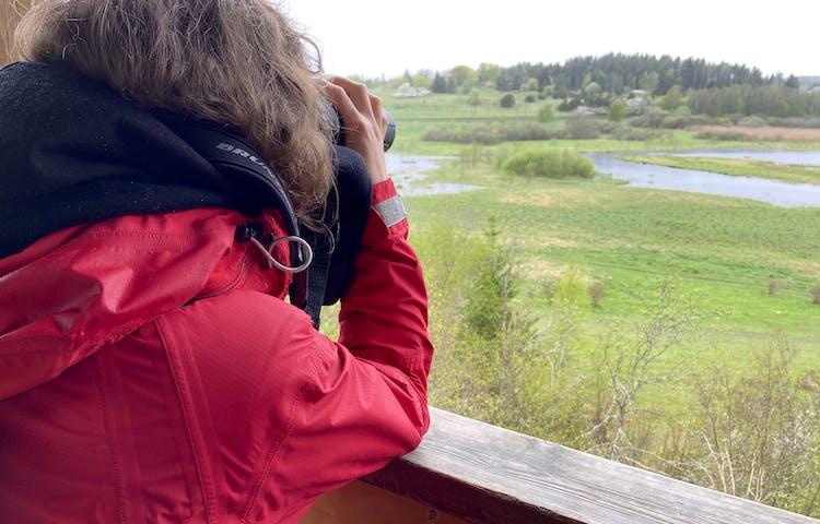 En person i röd jacka står i ett torn och tittar med kikare ut över en våtmark