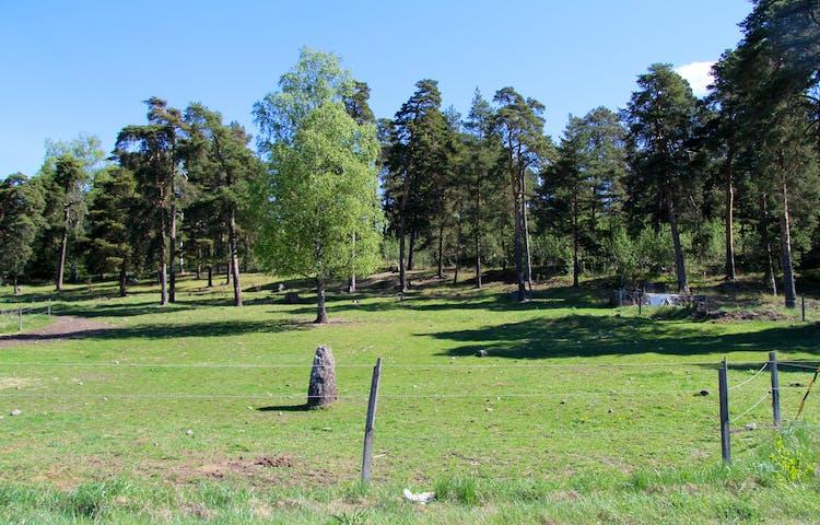 Välbetat gräs i stänglsad hage. Skog i bakgrunden.