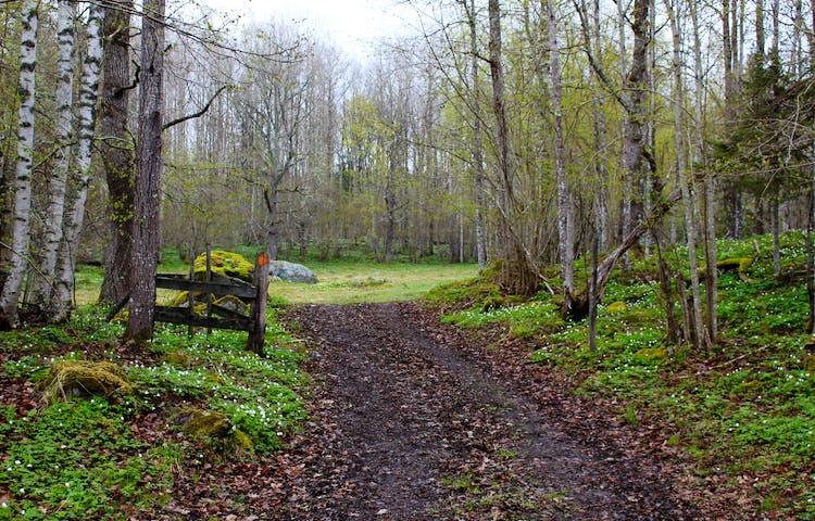 En bred, något ojämn stig leder fram till en liten äng. Vid sitgen finns en stolpe med ledmarkering på.