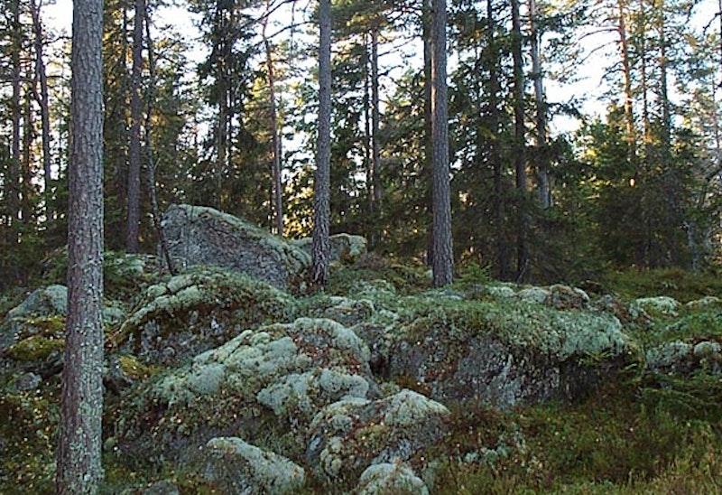 Juarbergen, Naturreservat