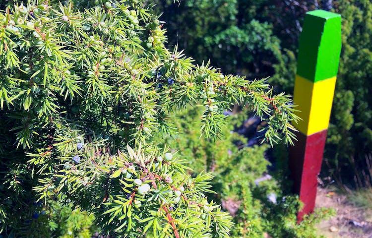 Enbuske och stolpe med ledmarkeringar i grönt, gult och rött.