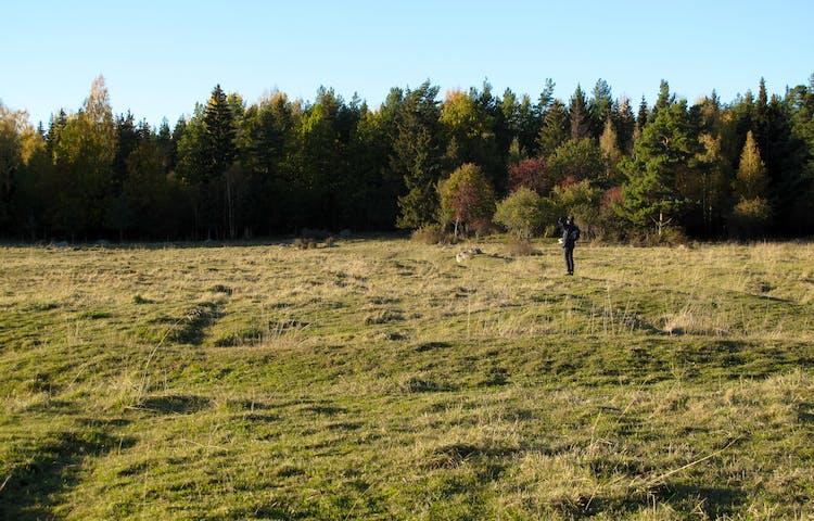 En person står på en äng och tittar mot skogen.