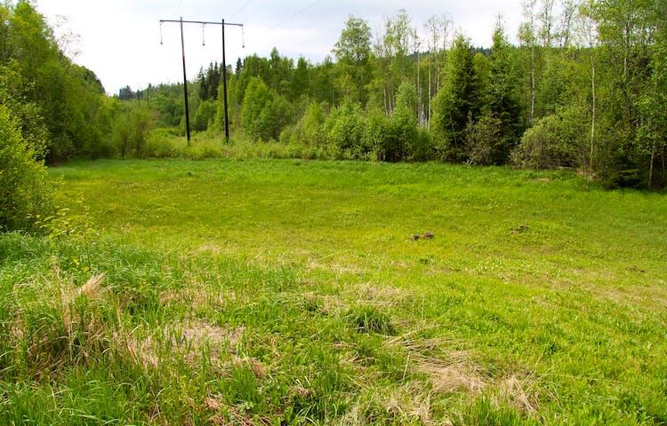En glänta med ängsmark i skogen.